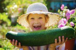 Кабачки для детей: полезные свойства, рецепты