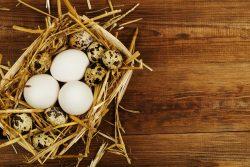 Яйца куриные или перепелиные? Сколько яиц можно детям?