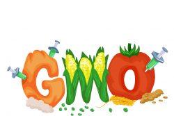ГМО в детском питании