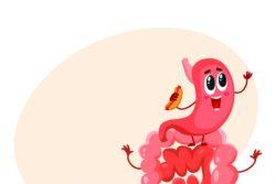 Основы физиологии: пищеварение в желудке и кишечнике